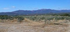 olivenhain.jpg